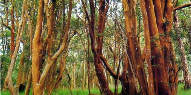 6 de Noviembre – Día de los Parques Nacionales Argentinos
