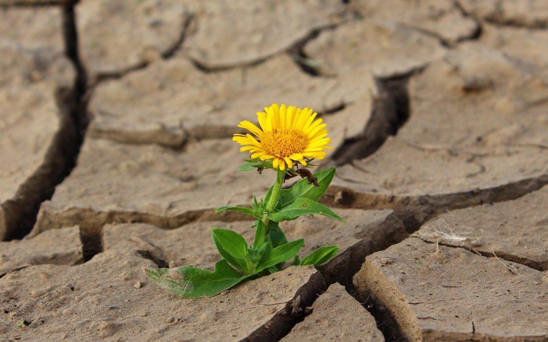 17 de junio – Día Mundial de Lucha contra la Desertificación y la Sequía