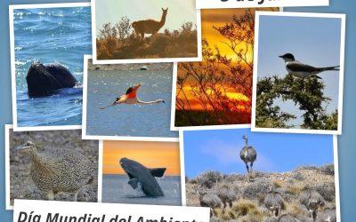 5 de Junio – Día Mundial del Ambiente