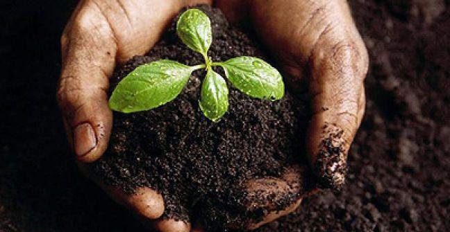 7 de julio – Día de la conservación de los suelos