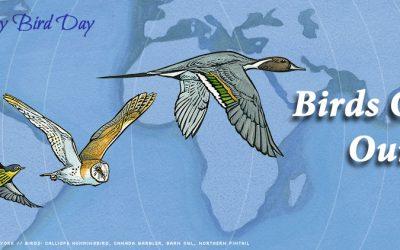 9 de mayo – Día Mundial de las Aves Migratorias
